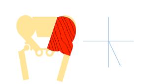 Small pennation angle
